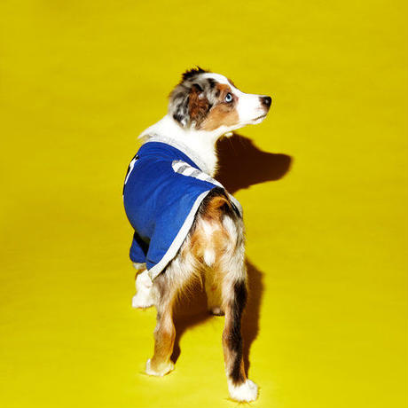 Ware Of The Dog DOT T-SHIRT BLUE