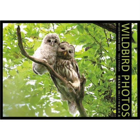 WILDBIRD PHOTOS MY 100 FAVORITE SHOTS 野鳥写真集 お気に入り100選