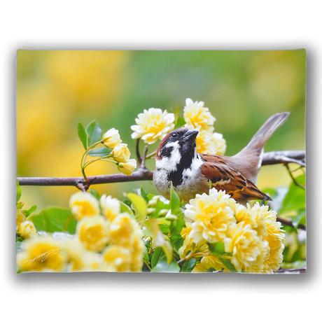 花と歌う【キャンバスタイプ】《ビッグバージョン》