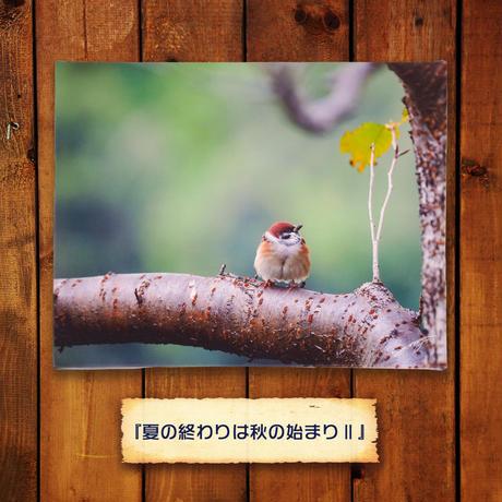 夏の終わりは秋の始まり Ⅱ【キャンバスタイプ】《リニューアル版》