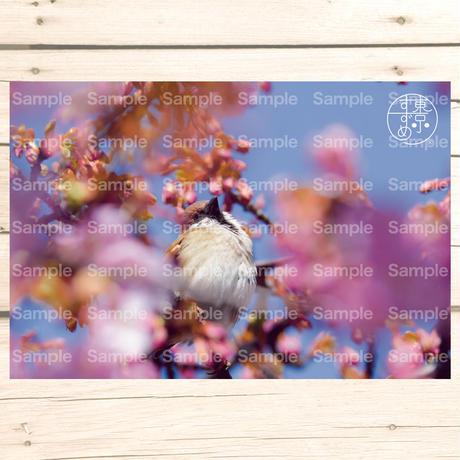 東京すずめ®ポストカード (Bセット)8枚入り