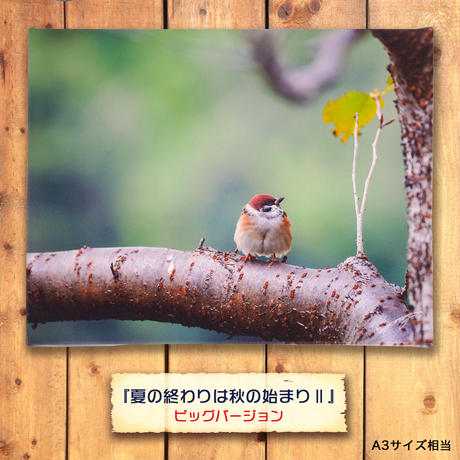 夏の終わりは秋の始まり Ⅱ【キャンバスタイプ】《ビッグバージョン》