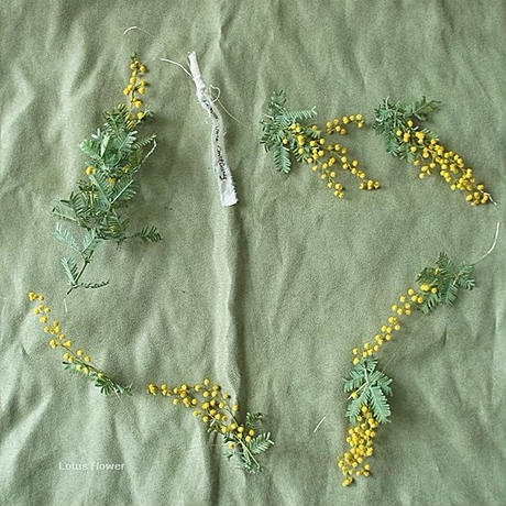 Mimosa garland