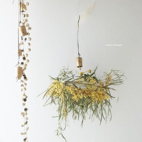 Mimosa dried flower of wind chimes