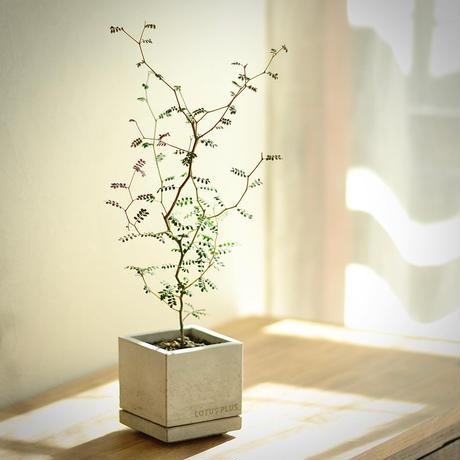 """""""STACK""""     植木鉢・セメント鉢 /  cement pot"""