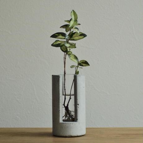 """PLUG-Large-"" ハイドロカルチャー 水栽培容器 花瓶"