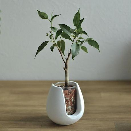 """POT-BELLY""  ハイドロカルチャー・水栽培容器・花瓶/cement flower vase"