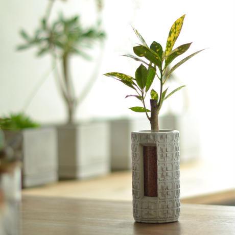 """""""PLUG - LW -""""  ハイドロカルチャー・水栽培容器/花瓶/Cement Flower Vase"""
