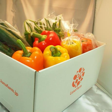 旬の野菜セット(5kg)