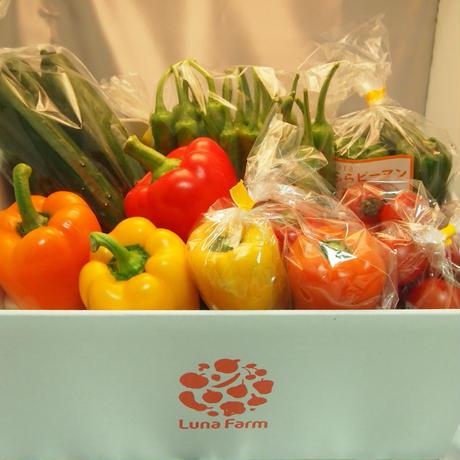 旬の野菜セット(3kg)