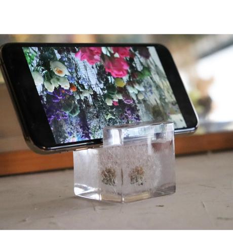 スマートフォンスタンド 「touch flowers」たんぽぽの綿毛