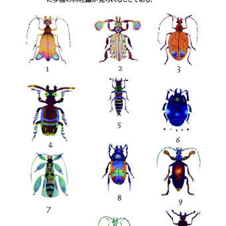 ニセ蟲図鑑 The Guide of Fantasic Insects