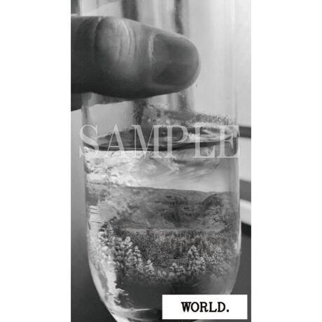 【C yana】Tシャツ「WORLD. 」(期間限定)IC-T07-07