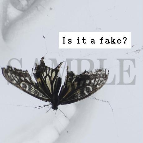 【C yana】Tシャツ「Is it a fake?  蝶」(期間限定)IC-T06-01-06