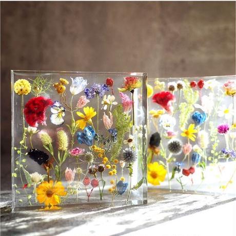 小花の標本