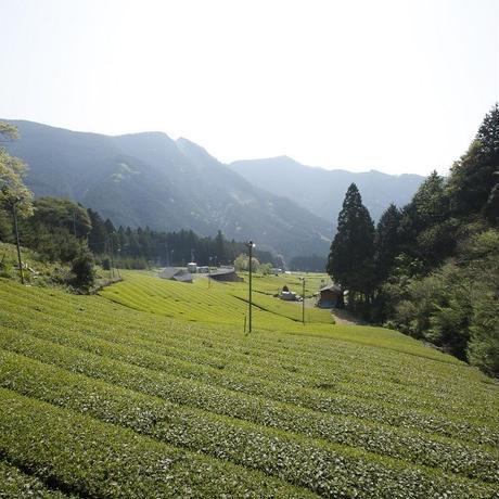 MAM CHA MINI HOUJI(ほうじ茶)