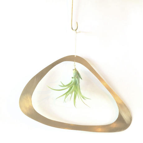 airplants with brass flame M