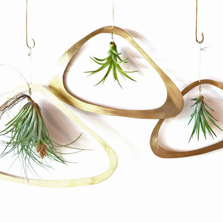 airplants with brassflame S