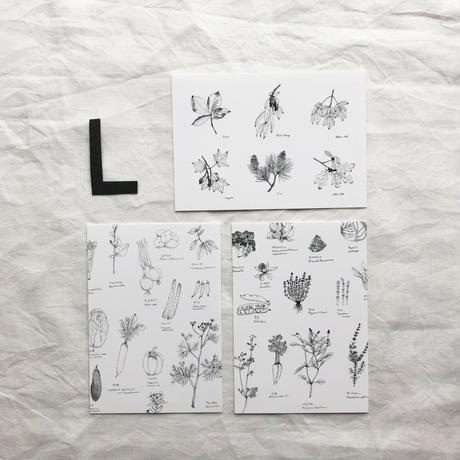 ポストカードセット:L ハーブ・野菜
