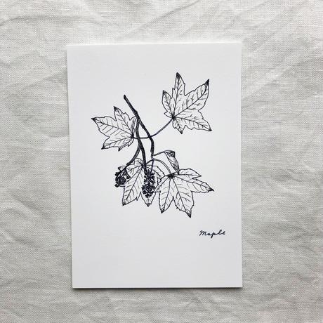 ポストカードセット:N 植物2