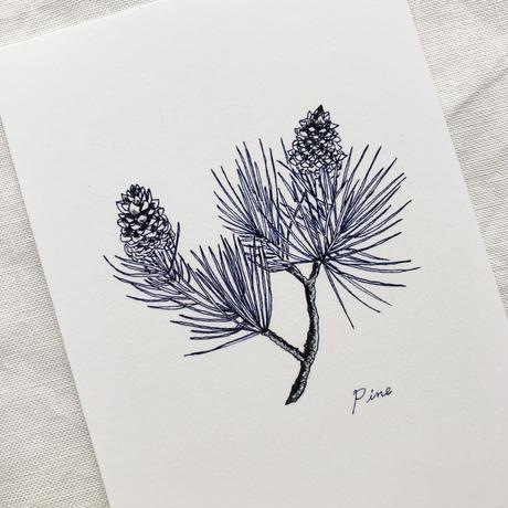 ポストカードセット:M 植物1