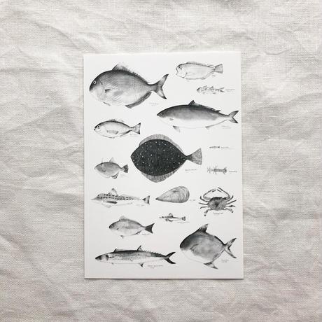 ポストカードセット:K お魚・お肉