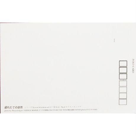 ポストカード【SeasonSelection vol.12 探春記】