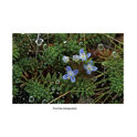 【ポストカード】草と木の組曲vol.2