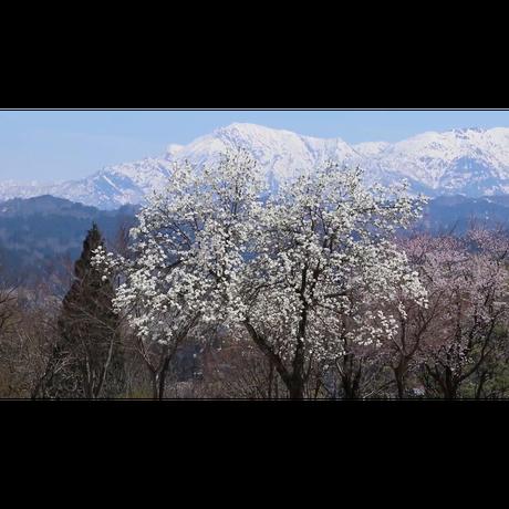 【期間限定手焼き受注販売】映像詩・雪国の春・花回廊日本海(DVD-R・BD-R同梱)
