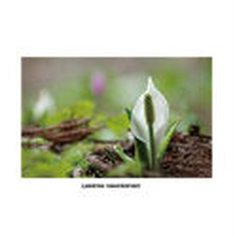 【ポストカード】草と木の組曲vol.1