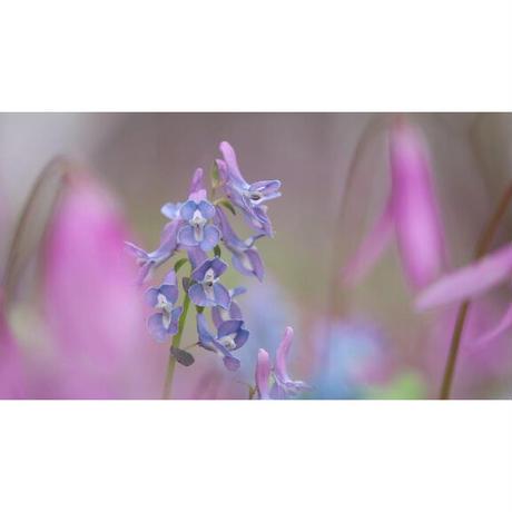 【期間限定手焼き受注販売】映像詩・北海道 大地の花束(DVD-R・BD-R同梱)