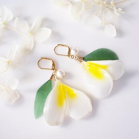 Plumeria Mini × green. 本物のお花 ミニプルメリアのダブルペタルとグリーンの耳飾り/ピアス/イヤリング パール&フェザー