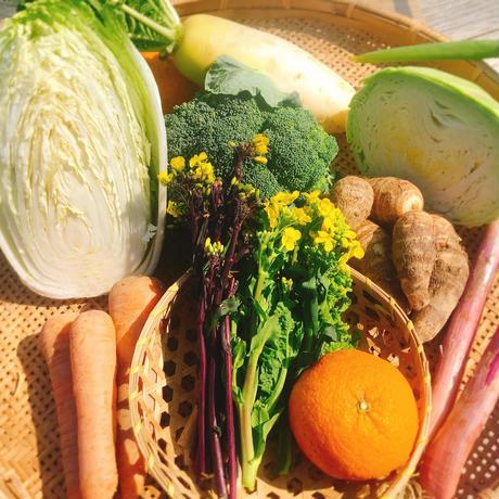 【スポット注文】自然農法 野菜セット  (税、送料、夏季クール便代込み)