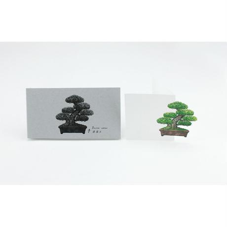 盆栽メモ 模様木