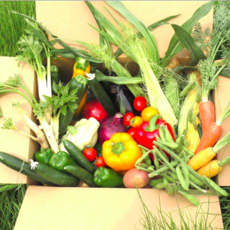 【購入可】まるよし野菜限定BOX(8月申し込み分)