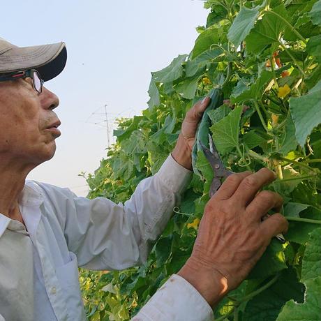 【スタンダードBOX】:8〜12種類の野菜をお届け
