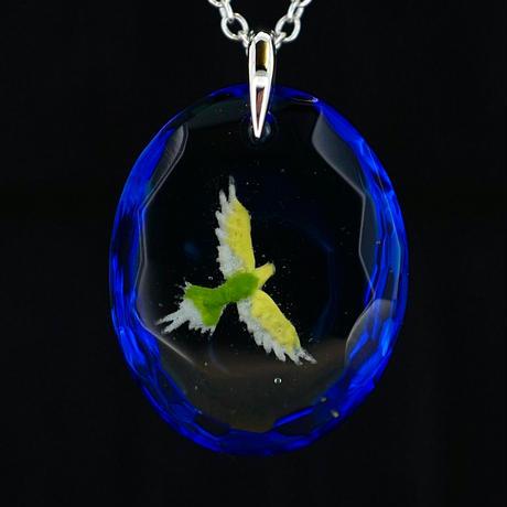 セキセイインコ(bird010)