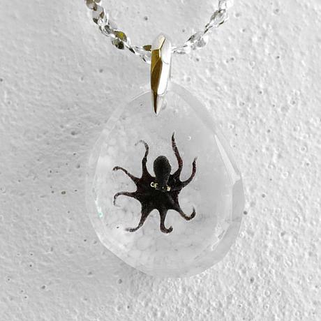 octopus005–海の頭脳–