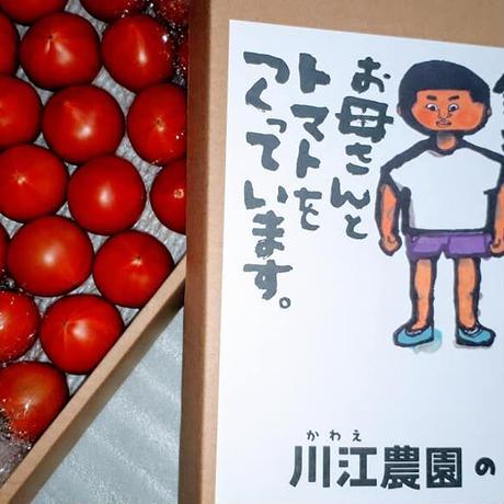 出荷量が限られる極上「銀行トマト」🍅(約30個) 高知県産 税込