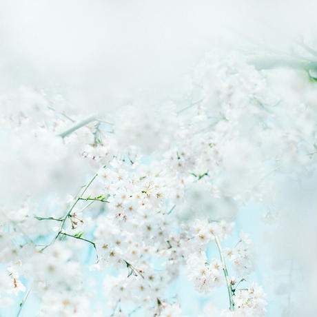 【original print】And Another Beautiful Spring Is Here to Celebrate Us (edition30)