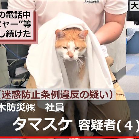 「逮捕ネコ」タマスケ A4 クリアファイル3種セット