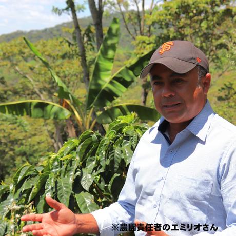 ニカラグア ブエノスアイレス マラカトゥーラ 200g