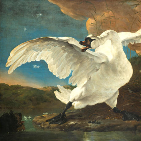 45cm角:【MCB452004】絶滅危惧種の白鳥 / JAN ASSELIJN(めがね拭き・メガネ拭き)MUSEUM SERIES