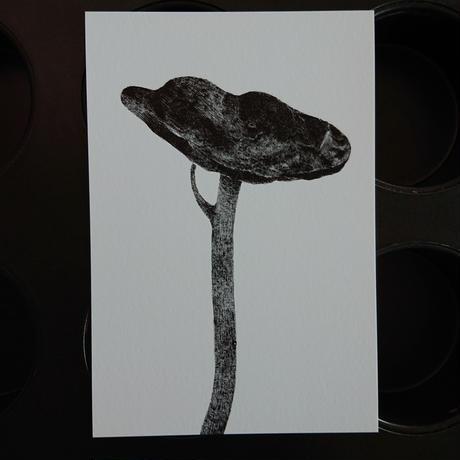 postcard  きいろの戸口「土手で見かける植物」