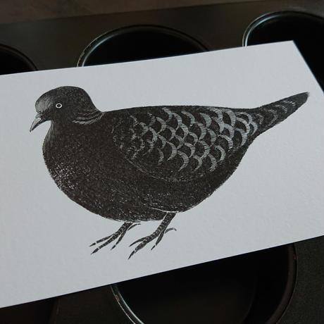 postcard  きいろの戸口「鳩」