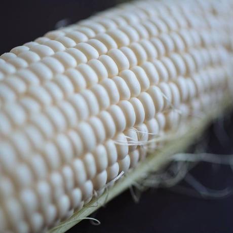 《10−12本》谷口めぐみ農園の白いトウモロコシ雪の妖精