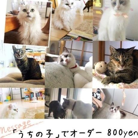 ペットさんの数を追加して注文/1ネコ・1ワン…500円