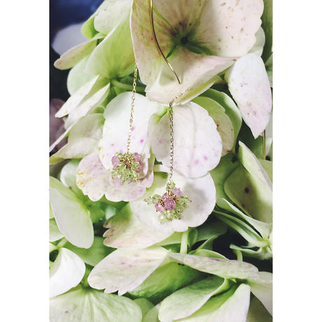 Hydrangea Antique K10 American Pierce