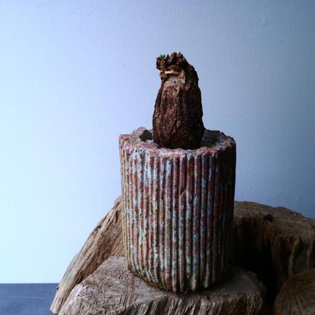 ペラルゴニウム  トリステ    Pelargonium triste No.011