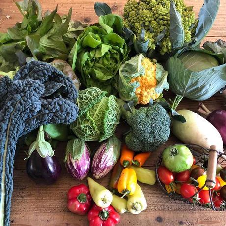 1月の西洋野菜セット
